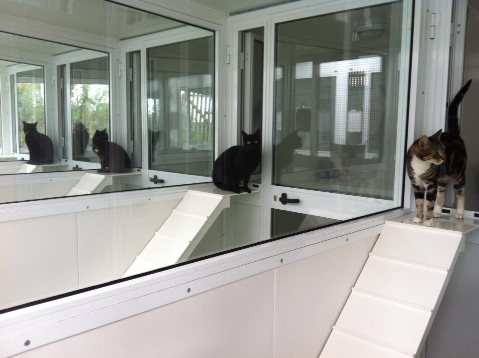Boarding Kennels and Cattery