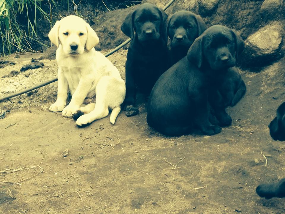 Puppies and Dogs For Sale
