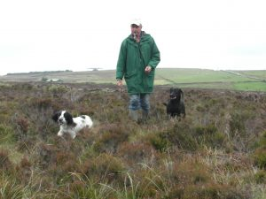 Gundog, Obedience and Behavioural Training